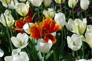 weiß und orange