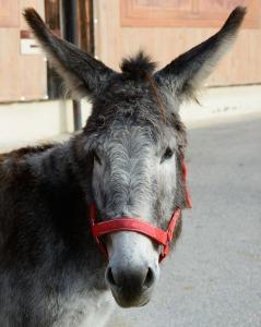 donkey-542598_1920