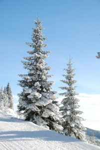 winter-5701_1920