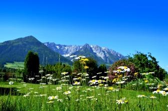 flower-meadow-2374841_1920