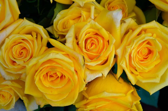 yellow-roses-2859077_1920