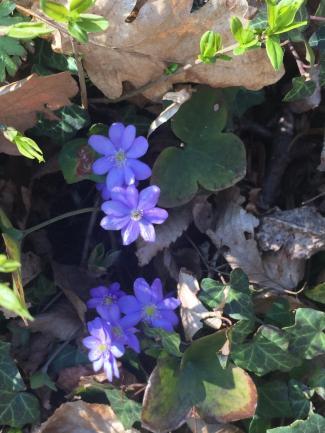 Blumen_Kreiner-Hofinger