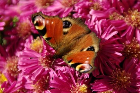 BlumeSchmetterling_Tscholl-Jagersberger