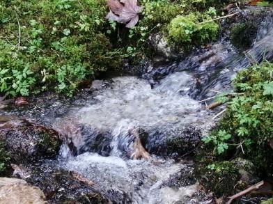 Fluss_Kreiner-Hofinger