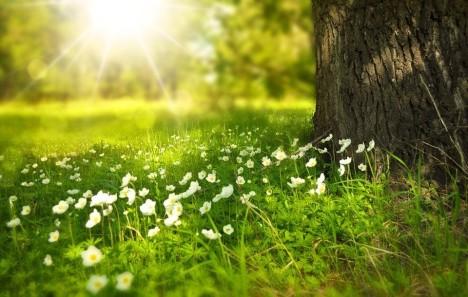 Blumenwiese_pixabay
